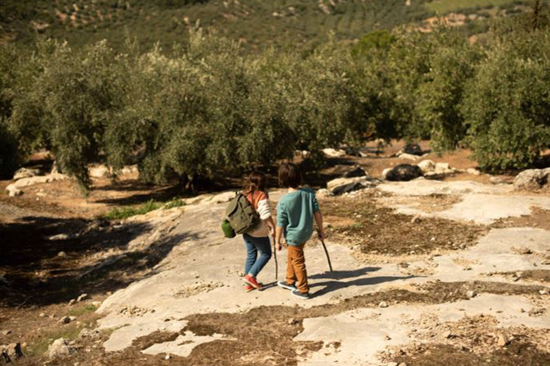 Have you heard of olive oil tourism?