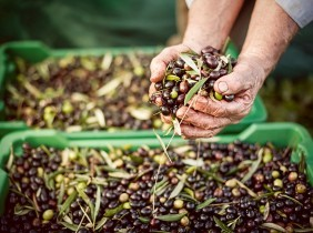 How is olive oil made in Spain?